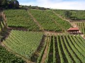 Vignobles Ruhlmann-Schutz l'Alsace mise bouteille