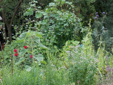 4 légumes super faciles à cultiver