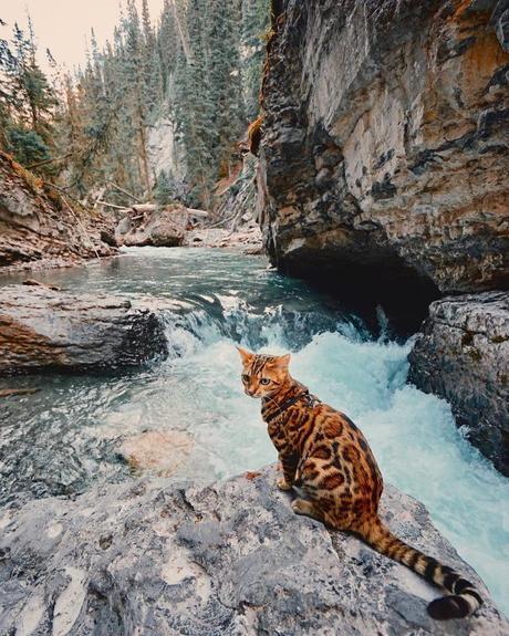 Suki le chat voyage, et vous avec !