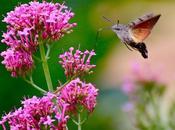 colibri jardins