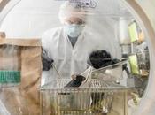 MICROBIOME INTESTINAL bactéries nous volent nutriments essentiels