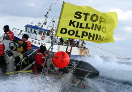 """Côte d'Ivoire: dix dauphins """"massacrés"""", l'armateur traduit en justice"""