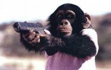 chimpanzé 5