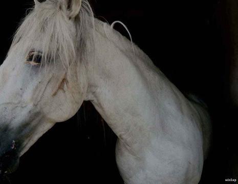 [chevaux-1.jpg]