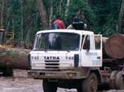 Arnaques Congo Greenpeace dénonce l'évasion fiscale orchestrée compagnies forestières européennes
