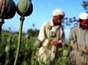 Afghanistan: soldats fran??ais victimes guerre contre drogue