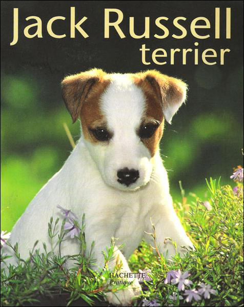 jack russell terrier hypoallergenic pin american pitbull terrier fun animals wiki videos 4400