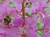 rôle insectes pollinisateurs