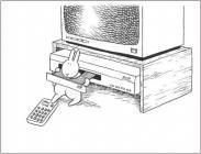Bunny suicide DVD