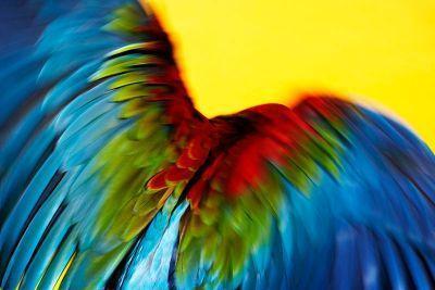 Perroquet-07.jpg
