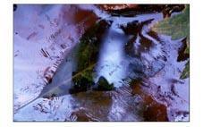 Photo-Didier-Vereeck-Art-Abstrait-Naturel-Feuille-Eau-Vosges