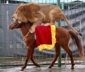 lion et cheval vue générale