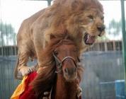 lion et cheval
