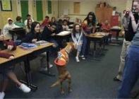 chien qui marche debout en classe