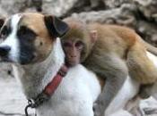 chien joue garde corps auprès d'un bébé singe