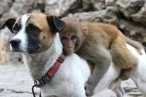 chien garde du corps et singe au zoo de Jiaozuo