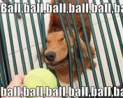 chien et balle