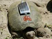 tortues wi-fi