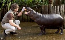 hippopotame marionnette Madagascar