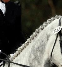 buttonbraids Les tresses photo cheval