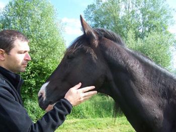 rdg2 Mon rival : un cheval à face de mouette photo cheval