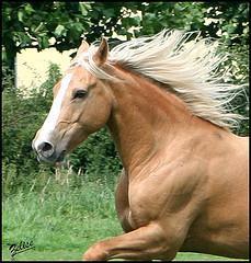 2953798721 364be5ee68 m Mon cheval serait il télépathe? photo cheval