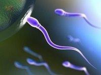 Comment améliorer la qualité du sperme