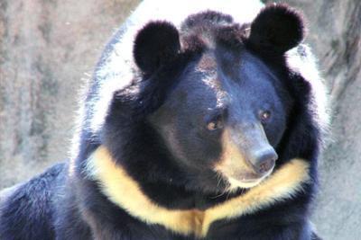 Article : Asie, espèces menacées ! (6)