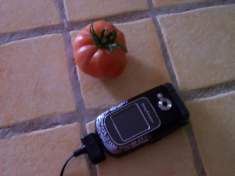 La tomate bio en hiver.... cherchez l'erreur....  10 janvier 2009