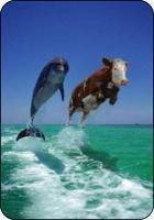 Flying vache