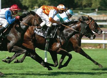 moy sport CHEVAUX Une alternative au couteau pour les chevaux réformés des courses photo cheval