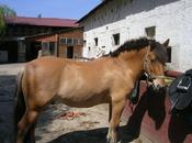 Chevaux club, chevaux propriétaire