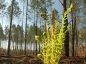 Tempête hectares forêts sinistrés