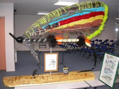 La plus grosse mouche du monde