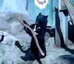 ours joue majorette dans d'Hiroshima