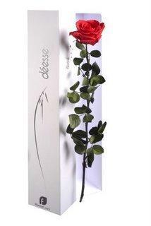 Rose eternelle pour la Saint-Valentin