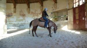 p10401571 300x168 Equitation western, 3 mois de travail... photo cheval