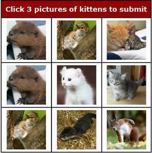 kitten-captcha.jpg