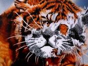Tigre chat