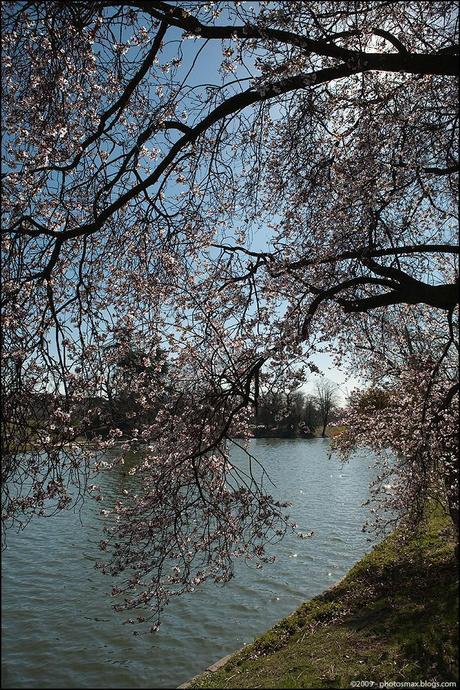 Boulogne_fleurs