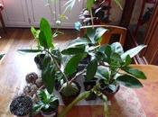 retour d'Edenia, avec cargaison plantes