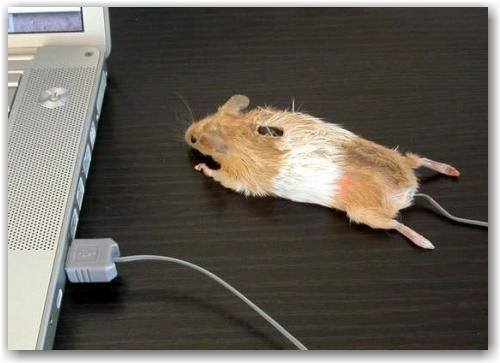 mouse_mouse_1