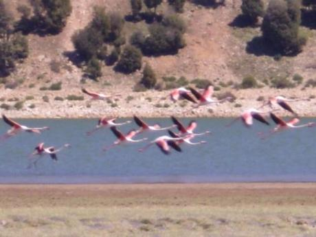 Birdwatching au lac Aguelmame Sidi Ali Maroc Route Azrou / Midelt