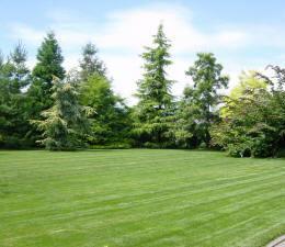 Comment avoir une belle pelouse?