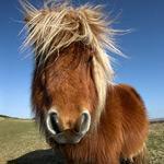 pony-captain-web
