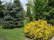 Jardins Brocéliande Bréal-sous-Montfort Bretagne (6/6)