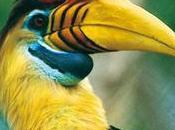 oiseaux tropicaux vous plaît