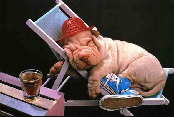 C'est l'heure de la sieste !