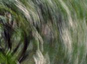 Photo Motion blur sour cherry 1032