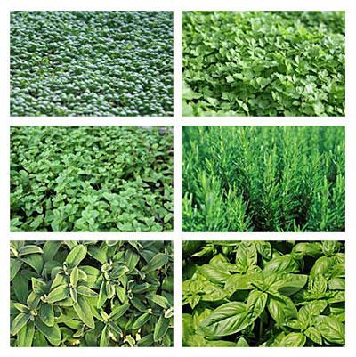 Astuces de cuisine et herbes aromatiques paperblog - Plantes aromatiques cuisine ...